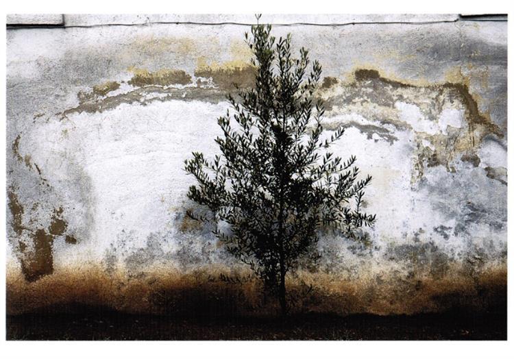 The wall #3, 2010 - Аббас Кіаростамі