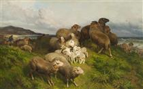 SHEEP IN A MEADOW - August Friedrich Schenck