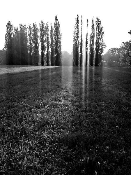 Shadows, 2016 - Alfred Freddy Krupa