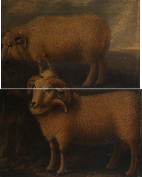 Exmoor Ram and Ewe (diptych) - William Shiels