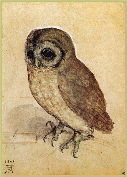 Маленькая сова, 1506 - Альбрехт Дюрер