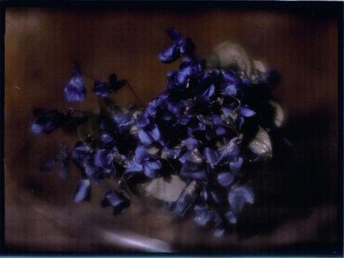 Violets, 1908 - Heinrich Kühn
