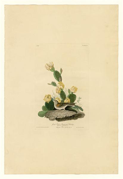 Plate 94 Grass Finch or Bay-winged Bunting - John James Audubon