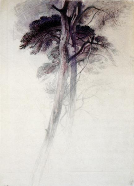 Study of Trees from Turner, 1857 - John Ruskin