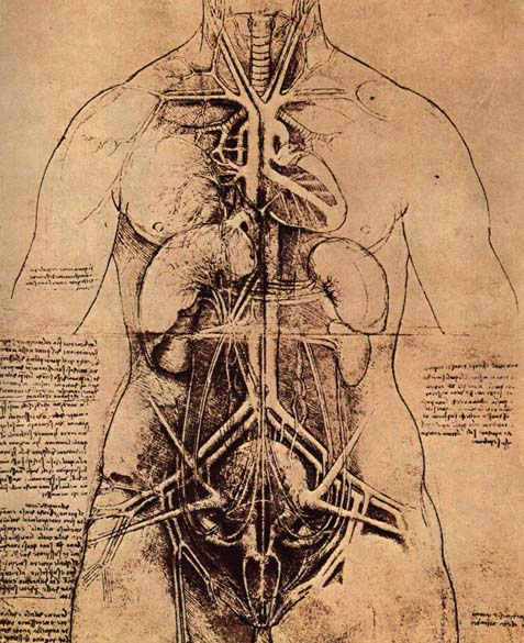 Drawing of a Woman's Torso, c.1507 - Leonardo da Vinci