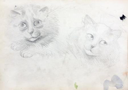 SKETCHES OF BURMESE CATS - Louis Wain