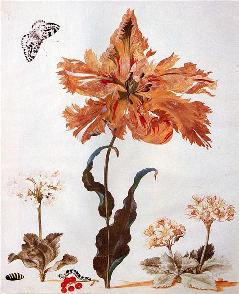 A Parrot Tulip, Auriculas, and Red Currants, with a Magpie Moth, its Caterpillar and Pupa - Maria Sibylla Merian