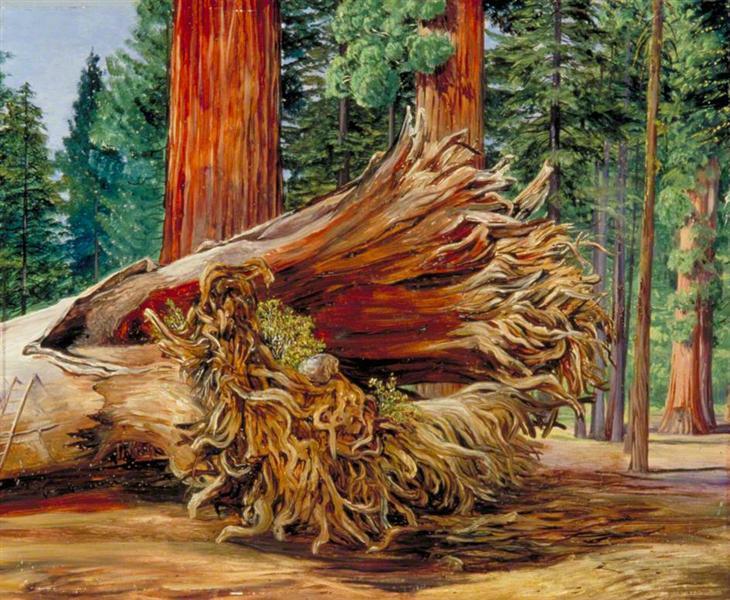 A Fallen Giant, Calaveras Grove, California - Марианна Норт