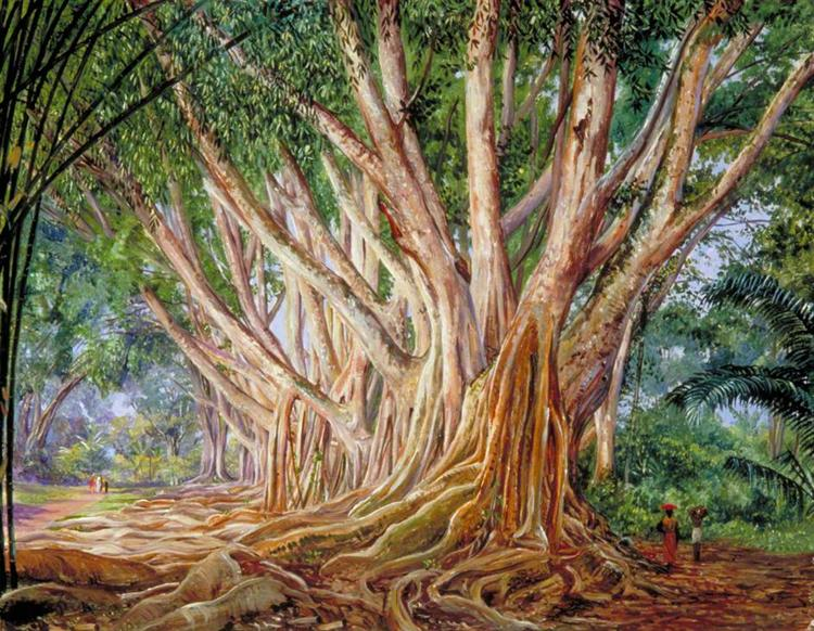 Avenue of Indian Rubber Trees at Peradeniya, Ceylon, 1877 - Marianne North