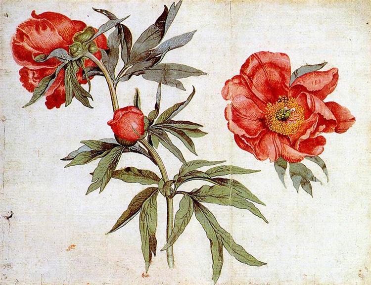 Study of Peonies, 1472 - Martin Schongauer