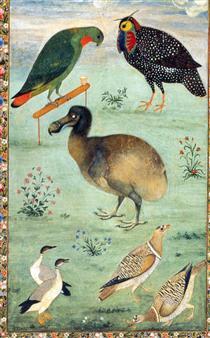 Dodo - Ustad Mansur