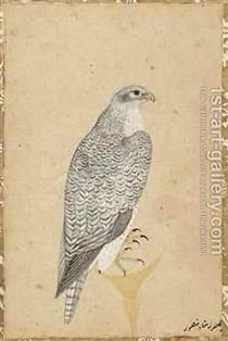 Portrait of a Falcon from Northern India - Ustad Mansur