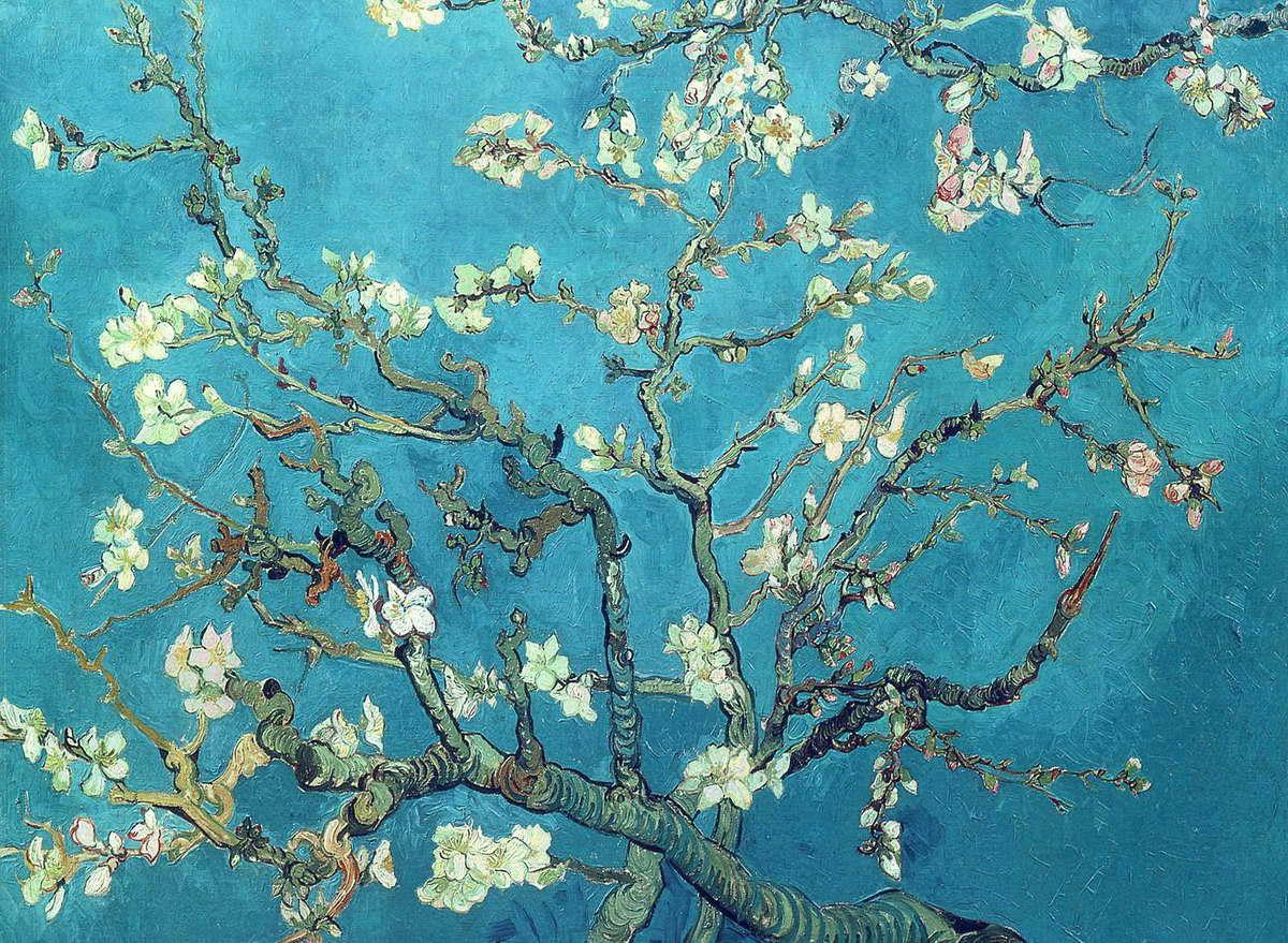 Almond Blossoms - Wikipedia