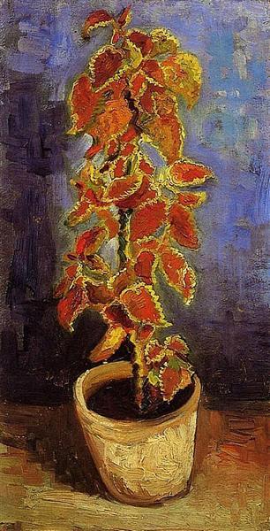 Coleus Plant in a Flowerpot, 1886 - Vincent van Gogh